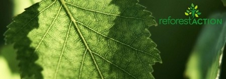 Pour ses vœux 2020, Noremat s'associe à Reforestaction... et participe au reboisement